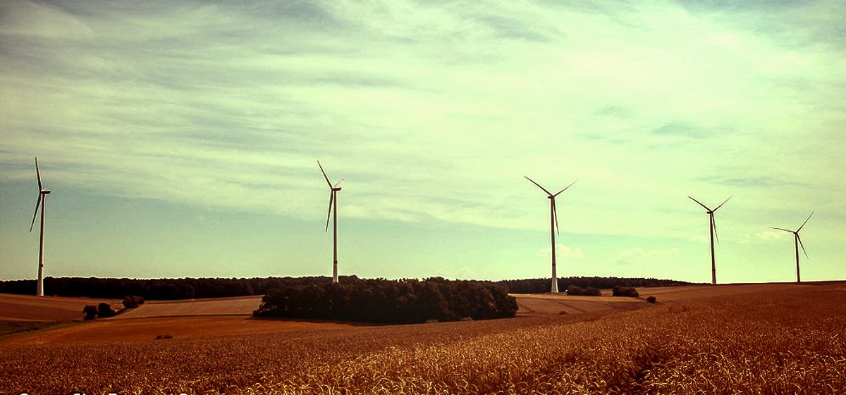 Grüne Geldanlagen: Nachhaltige Banken sind die richtige Wahl